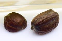 Semi del jojoba (Simmondsia chinensis) Immagine Stock Libera da Diritti