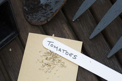 Semi del pomodoro Fotografie Stock
