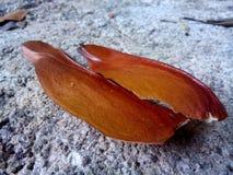Semi dell'albero Immagini Stock