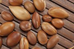 Semi dell'argania spinosa, pianta del Marocco per il cosmetico Immagini Stock