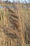 Semi dell'erba Immagini Stock Libere da Diritti