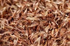 Semi dell'erba della palmarosa (martinii di Cymbopogon) Immagini Stock Libere da Diritti