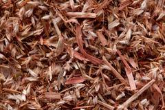 Semi dell'erba della palmarosa (martinii di Cymbopogon) Immagine Stock Libera da Diritti