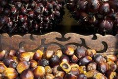 Semi della palma da olio Immagine Stock