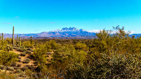 The semi-desert of Four Peaks Wilderness in Arizona Royalty Free Stock Photos