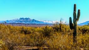 The semi-desert of Four Peaks Wilderness in Arizona Stock Photography