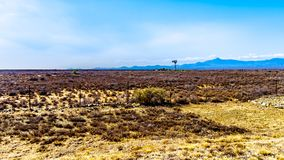 The semi desert Karoo Region in Eastern Cape Province in South Africa. With a lone wind-pump in the middle of nowhere in the dry landscape Stock Images