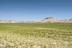 Semi-desert landscape Royalty Free Stock Image