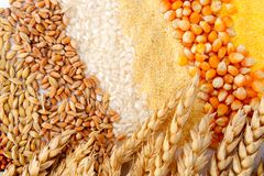 Semi di cereale ed orecchie del frumento Immagini Stock Libere da Diritti