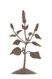 Semi di Chia nella forma di pianta di chia Immagine Stock