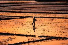 Semi di cucito di un agricoltore nel Vietnam Fotografie Stock