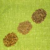 Semi di finocchio, cumino e coriandolo su una foglia verde Fotografie Stock