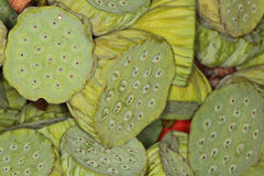 Semi di fiore di Lotus Immagini Stock