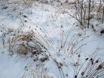 Semi di inverno Fotografia Stock Libera da Diritti