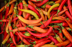 Semi-dry peppers. Full frame of semi-dry peppers background - heap of semi-dry peppers on cardboard box, ready for sale Royalty Free Stock Photo