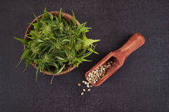 Semi e germoglio della cannabis fotografia stock
