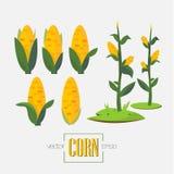 Semi ed albero del cereale - Immagini Stock