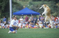 Semi-Finals of Canine Frisbee Contest Royalty Free Stock Photography