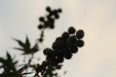 Semi, foglie ed ombra immagini stock