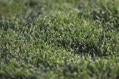 Semi frozen grass Royalty Free Stock Photography