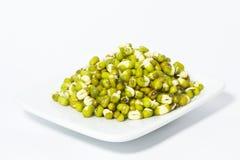 Fagioli germinati. Fotografia Stock