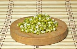 Fagioli germinati. Fotografia Stock Libera da Diritti