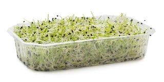 Semi germogliati del porro in un vassoio di plastica Immagine Stock