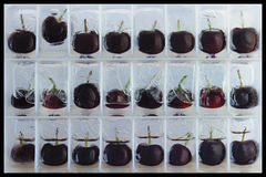 Semi-glazed cherries. Cherries each one in a seperate frozen 'compartment' in three rows.  In a state of partial frozen water - all in a row with one that has ' Stock Photo