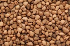 Semi indiani organici della guaiava (psidium guajava) Fotografie Stock
