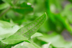 Semi lungo il lato inferiore di una certa pianta della giungla che simbolizza motivazione, inizio, origine e fonte Fotografie Stock Libere da Diritti