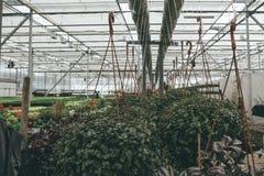 Semi moderni della serra o della serra, di coltivazione e di crescita delle piante ornamentali, scuola materna del fiore dentro l Immagini Stock