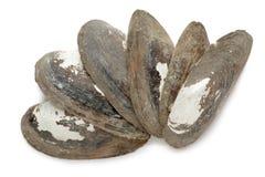 Semi organici del mitilo comune (Mytilus edulis) Fotografia Stock Libera da Diritti