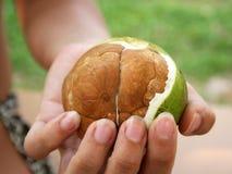 Semi parzialmente scoperti della palma Immagini Stock Libere da Diritti