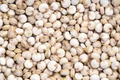 Semi pieni della quinoa della struttura Fotografie Stock
