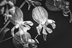Semi pronti ad essere distaccato e mosca a partire dal fiore sui summerseeds pronti ad essere distaccato e mosca a partire dal fi Fotografie Stock