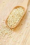 Semi sani della quinoa Immagine Stock