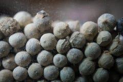 Semi secchi di piper nigrum del pepe bianco in barattolo di vetro Fotografie Stock