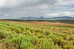 Semi sucha ziemia uprawna Zdjęcie Stock