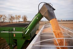 Semi and trailer being loaded with harvested corn. For transport by a tractor using a hopper and funnel in an agricultural field Royalty Free Stock Photos