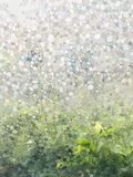Semi transparent film on the window show blurred garden background. Royalty Free Stock Image
