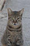 Semi-wild cat stock image