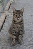 Semi-wild cat stock images