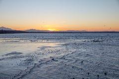 Semiahmoo海湾冬天日出、波纹和鸟,白色岩石,加拿大 免版税库存图片