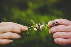 Semilla de girasol Fotografía de archivo libre de regalías