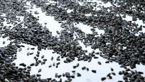 Semilla de girasol que procesa en la fábrica almacen de video
