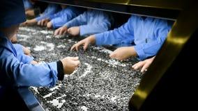 Semilla de girasol que procesa en la fábrica almacen de metraje de vídeo