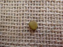 Semilla de la cerca de la flor seca Fotos de archivo libres de regalías