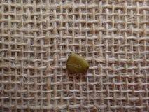 Semilla de la cerca de la flor seca Imagen de archivo libre de regalías