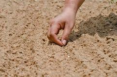 Semilla de la siembra, agricultura, semilla, sembrando, almácigo, cierre para arriba Imagen de archivo libre de regalías