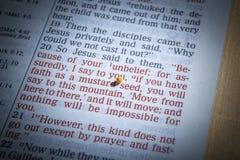 Semilla de mostaza y biblia abierta Fotografía de archivo